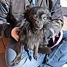 Adopt A Pet :: Grady