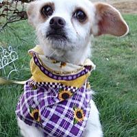 Adopt A Pet :: Laverne - Tacoma, WA