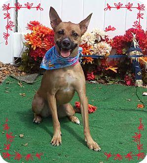 Basenji Mix Dog for adoption in Marietta, Georgia - JOJO