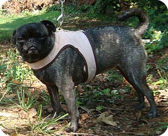 Ocala, FL - Pug  Meet ET a Pet for Adoption