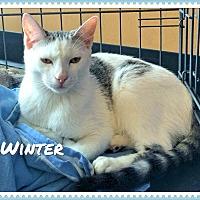 Adopt A Pet :: Winter - Arcadia, CA