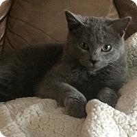 Adopt A Pet :: Dimitri - Ogallala, NE