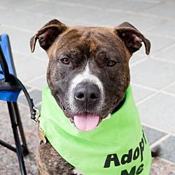 small dog rescue richmond va