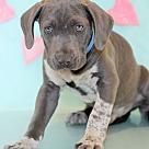 Adopt A Pet :: Hogan