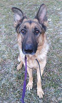 Adopt A Pet :: Neutron  - Missoula, MT