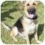 Photo 3 - German Shepherd Dog Dog for adoption in Pike Road, Alabama - Trooper