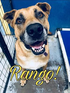 Adopt A Pet :: Rango  - Mt Vernon, IN