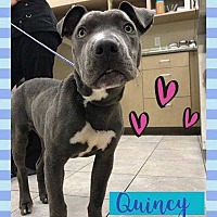 Adopt A Pet :: Quincy - Calimesa, CA