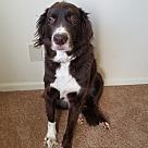 Adopt A Pet :: Chipper