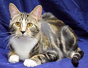Adopt A Pet :: Winky  - Edmond, OK