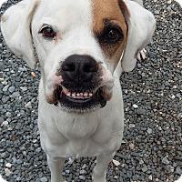 Adopt A Pet :: Deacon (COURTESY POST) - Baltimore, MD