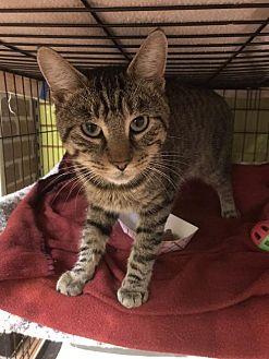 Adopt A Pet :: Bud  - Blasdell, NY