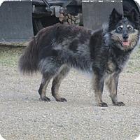 Adopt A Pet :: Saga - Minneapolis, MN