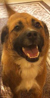 Adopt A Pet :: Norah  - Germantown, TN
