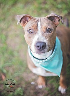 Terrier (Unknown Type, Medium) Mix Dog for adoption in Kingwood, Texas - Pluto
