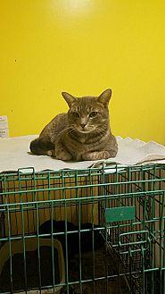Adopt A Pet :: Ni  - Mt Vernon, IN