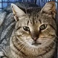 Adopt A Pet :: Sarah - Long Beach, NY