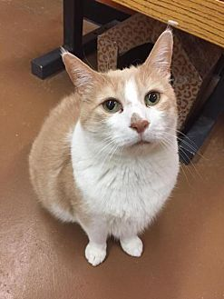 Adopt A Pet :: Findley  - Blasdell, NY