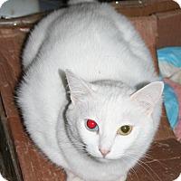 Adopt A Pet :: Mr. White (COURTESY POST) - Baltimore, MD
