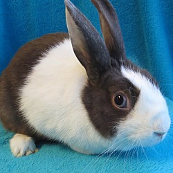 Rabbits, horses, hamsters and more to adopt and rescue