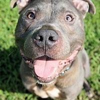Adopt A Pet :: 1708-1611 Street Shark - Virginia Beach, VA