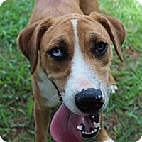Adopt A Pet :: Gamer--Reduced fee to $200 - Hagerstown, MD
