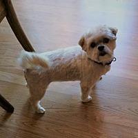 4 Luv of Dog Rescue in Fargo, North Dakota