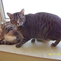 Adopt A Pet :: Yoda - Live Oak, FL
