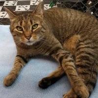 Adopt A Pet :: Sasha - Erie, PA