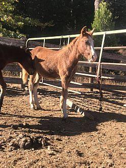 Adopt A Pet :: Graham  - Greenville, CA