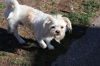 Adopt A Pet :: Louie  - Seattle, WA