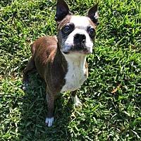 Adopt A Pet :: Gus - Katy, TX