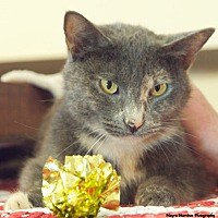 Adopt A Pet :: Twinkle - Chattanooga, TN