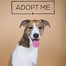 Adopt A Pet :: Ty