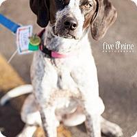 Adopt A Pet :: Lizzie - La Crosse, WI