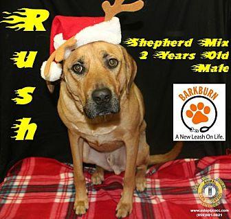 Adopt A Pet :: Rush  - Nicholasville, KY