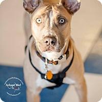 Adopt A Pet :: Fallon - La Crosse, WI