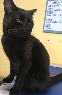 Adopt A Pet :: Montague  - Devon, PA