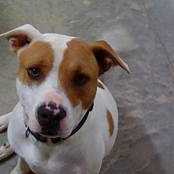 Puppies for Sale in Augusta Georgia - Adoptapet com