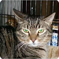 Adopt A Pet :: Barn Cats - Ocean City, NJ