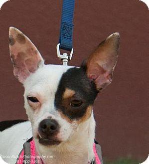 Dog Adoption Boston Massachusetts