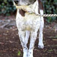 Adopt A Pet :: Timber - San Diego, CA
