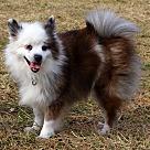 Adopt A Pet :: S'mores