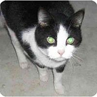 Adopt A Pet :: Gabby - Strathmore, AB