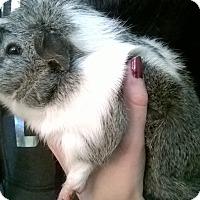 Adopt A Pet :: Pepper - Spokane Valley, WA