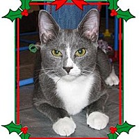 Adopt A Pet :: Dalla - Miami, FL