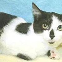 Adopt A Pet :: Bunny Rabbit - Miami, FL