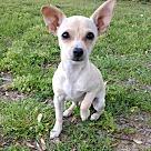 Adopt A Pet :: Solomon