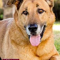 Adopt A Pet :: Rocky - Marina del Rey, CA