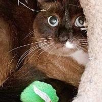 Adopt A Pet :: Beauty - Putnam, CT